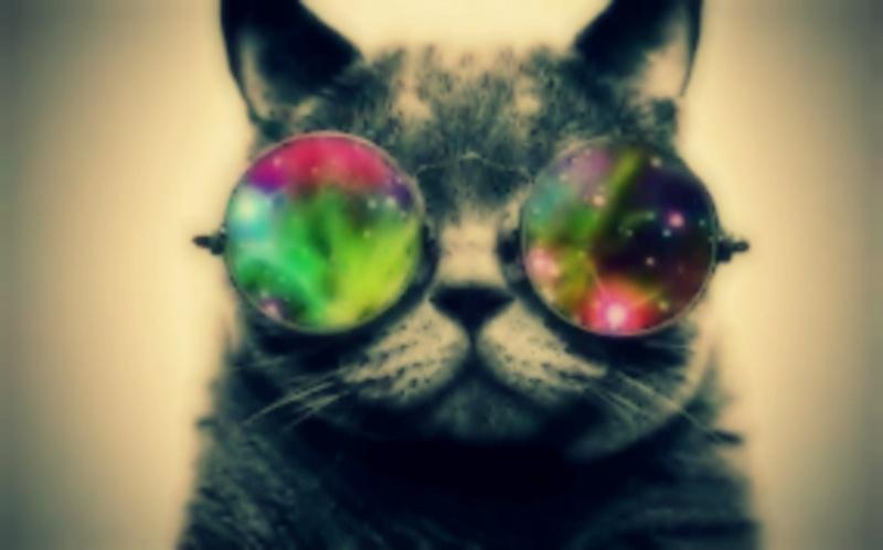 Идея блога для любителей кошек